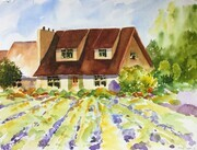 Lavender Farm watercolour